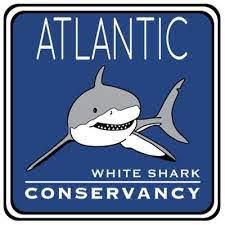 white shark charity logo
